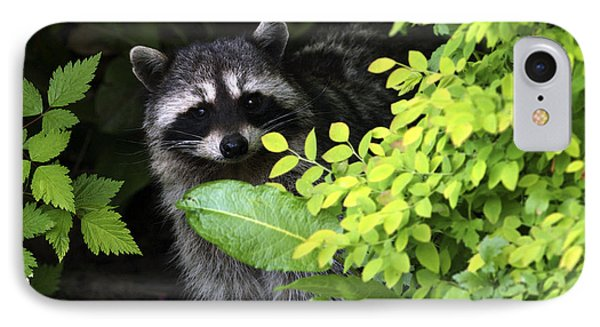 Raccoon Peek-a-boo Phone Case by Sharon Talson