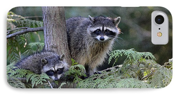 Raccoons In Stanley Park IPhone Case by Maria Angelica Maira