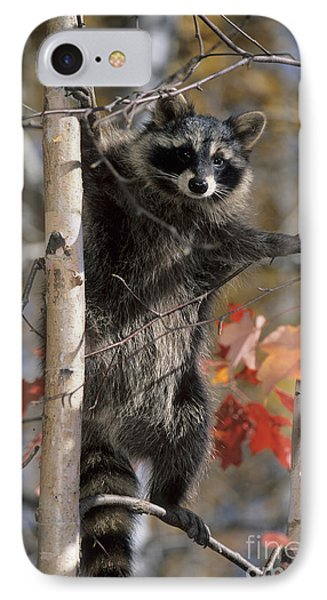 IPhone Case featuring the photograph Racoon In Tree by Chris Scroggins