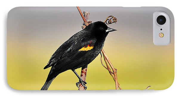 Radiant Red-winged Phone Case by Al Powell Photography USA