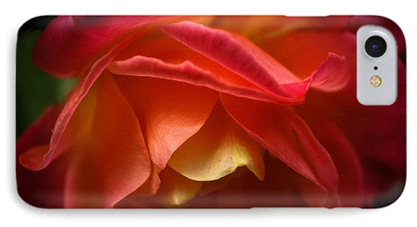 Radiant Rose IPhone Case by Ronda Broatch