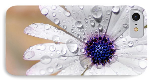 Rain Soaked Daisy IPhone Case by Kaye Menner