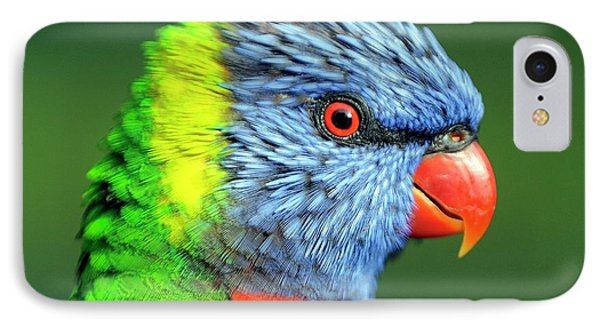 Rainbow Lorikeet IPhone Case by Bildagentur-online/mcphoto-schulz