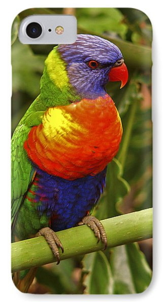 Rainbow Lorikeet.  IPhone Case by Chris  Kusik