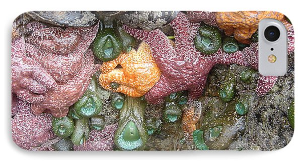 IPhone Case featuring the photograph Rainbow Of Sea Creatures by Karen Molenaar Terrell