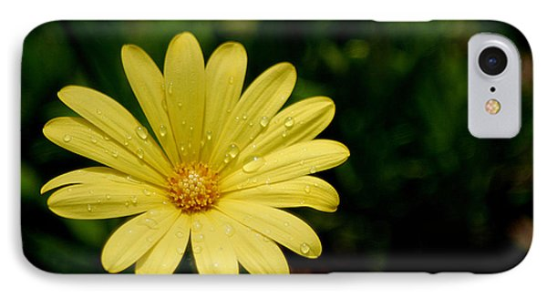 Raindrops And Daisy IPhone Case by Living Color Photography Lorraine Lynch