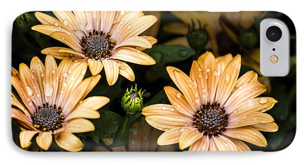 Raindrops On Gerbera Daisies IPhone Case by Photographic Art by Russel Ray Photos