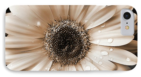 Raindrops On Gerber Daisy Sepia IPhone Case by Jennie Marie Schell