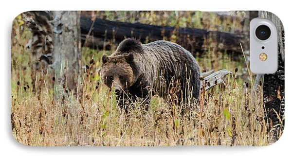 IPhone Case featuring the photograph Rainy Day Grizzly Sow by Yeates Photography