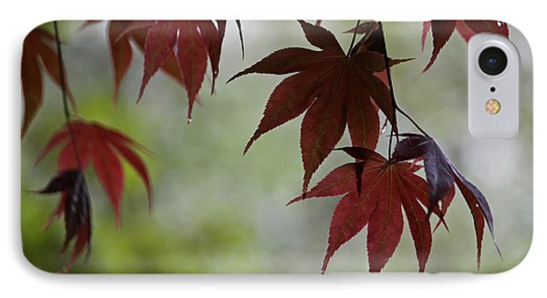 Rainy Day Series - Japanese Red Maple II IPhone Case