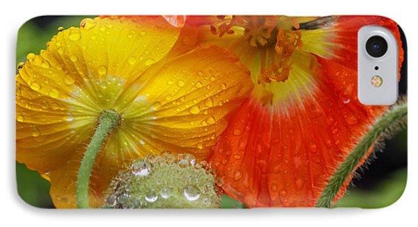 Rainy Day Series - Orange And Yellow Poppies IPhone Case