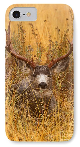 IPhone Case featuring the photograph Rainy Mountain Buck by Aaron Whittemore