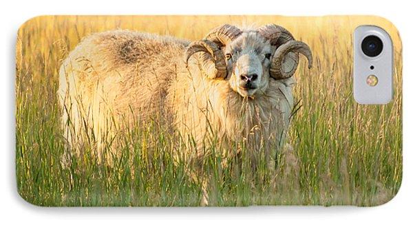 Ram Curls Phone Case by Joan Herwig