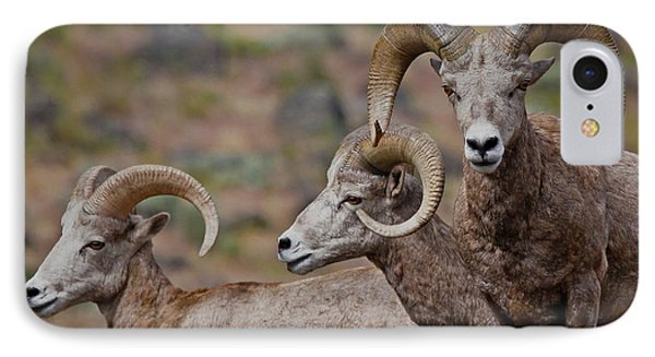 Rams In Three IPhone Case by Athena Mckinzie