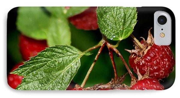 Raspberries IPhone Case by Nikolyn McDonald