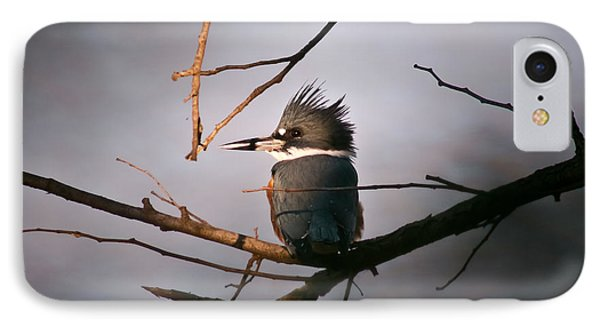 Ray Of Light On Kingfisher IPhone Case