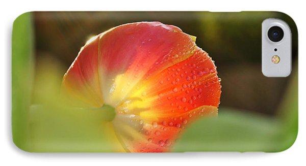 Rays Of Sunshine On Tulip IPhone Case