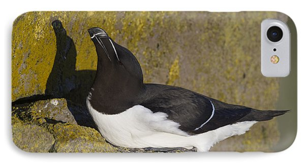 Razorbill IPhone Case by John Shaw