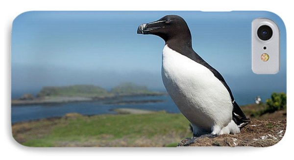 Razorbill On A Coastal Ledge IPhone Case by Simon Booth