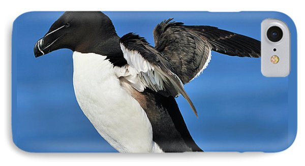 Razorbill IPhone Case by Tony Beck