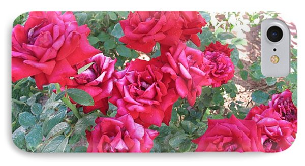 Red And Pink Roses IPhone Case by Chrisann Ellis