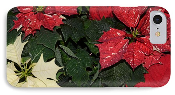 Red And White Poinsettia Phone Case by Kathleen Struckle