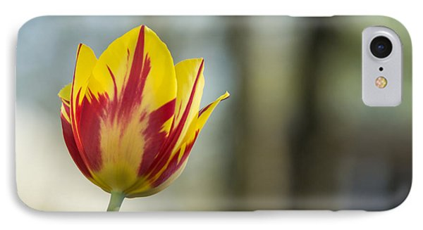 Red And Yellow Tulip On Blurred Background IPhone Case by Photographic Arts And Design Studio