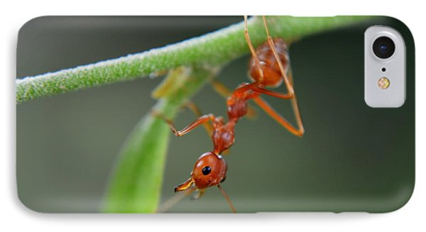 Red Ant IPhone Case by Michelle Meenawong