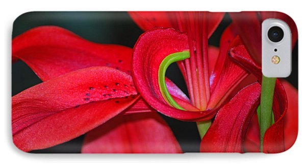 Red Asiatic Lily IPhone Case