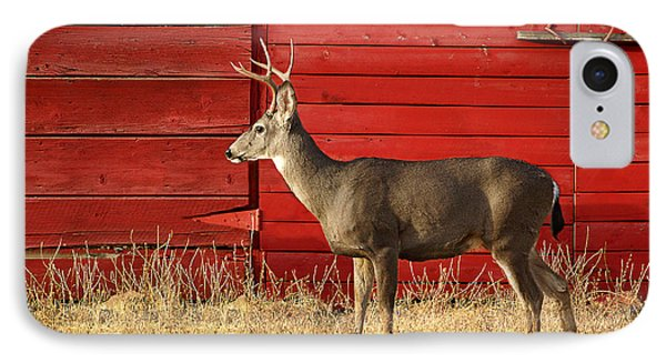 Red Barn Buck IPhone Case