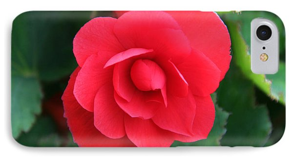Red Begonia IPhone Case by Sergey Lukashin