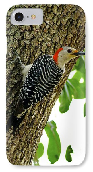 Red-bellied Woodpecker. IPhone Case by Chris  Kusik