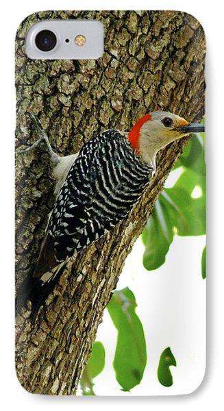 Red-bellied Woodpecker. IPhone Case