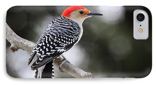 Red-bellied Woodpecker IPhone Case by Gary Hall