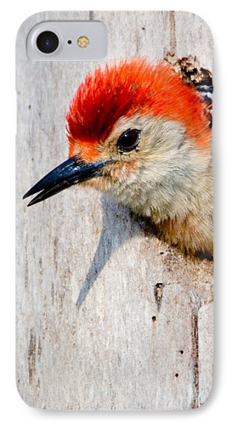 Red-bellied Woodpecker II IPhone Case