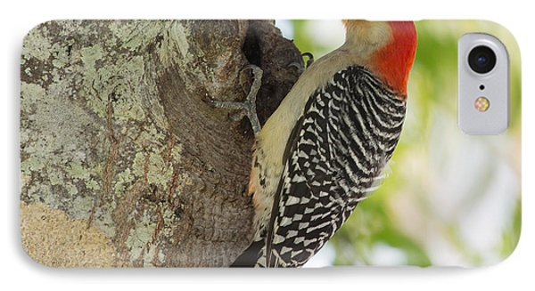 Red-bellied Woodpecker Phone Case by John M Bailey