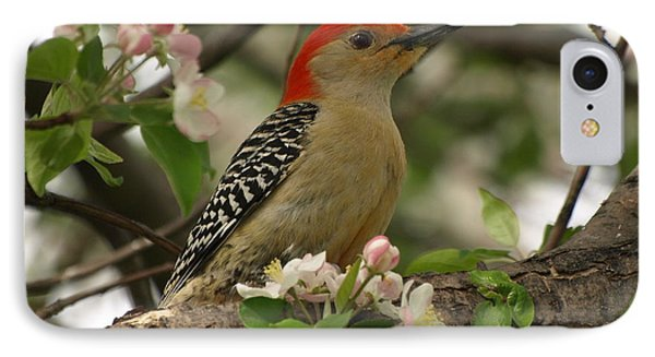 IPhone Case featuring the photograph Red-bellied Woodpecker by James Peterson