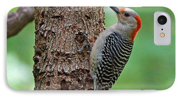 Red Bellied Woodpecker IPhone Case by Sandy Keeton