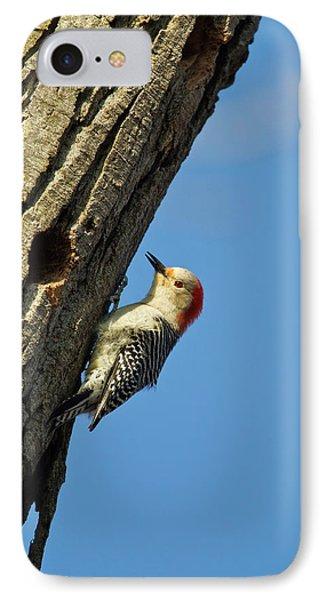 Red-bellied Woopecker In Tree IPhone Case