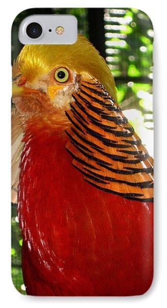 Red Bird IPhone Case by Pamela Walton