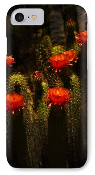 Red Cactus Flowers II  Phone Case by Saija  Lehtonen