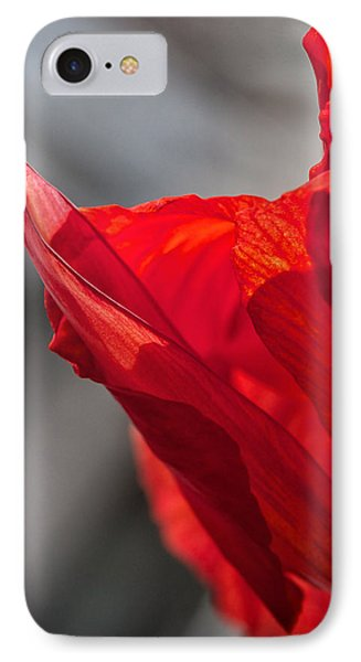 Red Canna IPhone Case by Maria Robinson