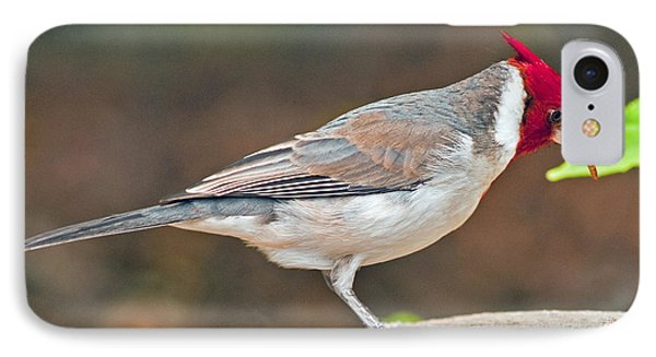 Red-capped Cardinal IPhone Case