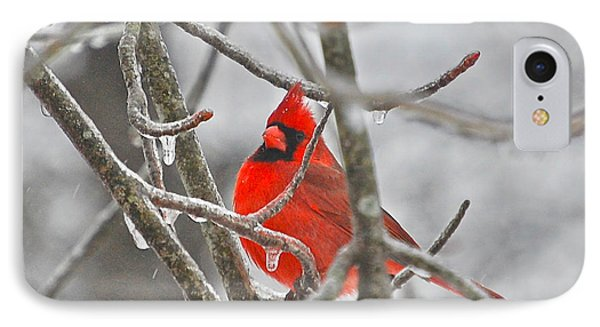 Red Cardinal Northern Bird IPhone Case by Peggy Franz