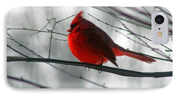 Red Cardinal On Winter Branch  Phone Case by Karen Adams