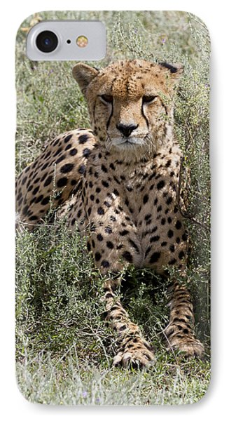 IPhone Case featuring the photograph Red Cheetah Portrait by Chris Scroggins