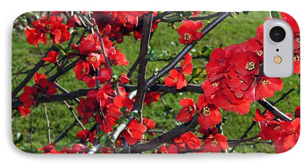 Red Cherry  IPhone Case by Debra Crank