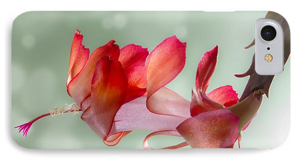 Red Christmas Cactus Bloom IPhone Case by Patti Deters