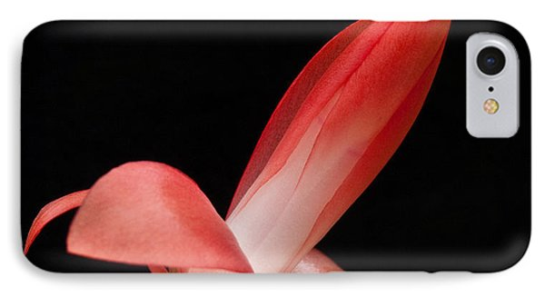 Red Christmas Cactus IPhone Case
