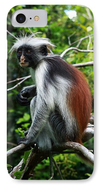 Red Colobus Monkey Phone Case by Aidan Moran